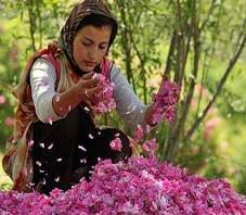 iran_fars_meimand_golab_dis